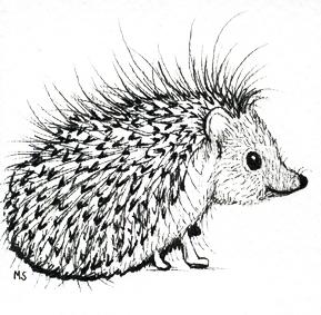 hubba hedgehog